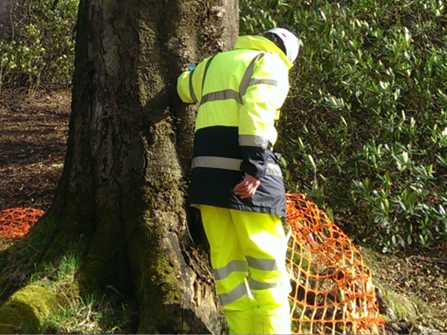 Ecological Clerk of Works | Hampshire  Read more