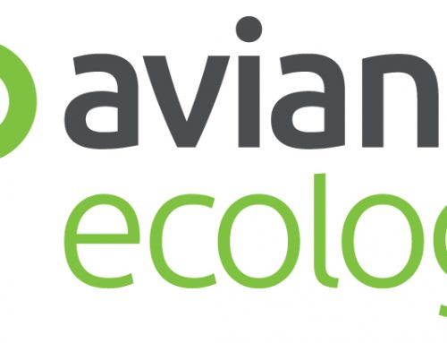 Ecologist (full time, permanent role)