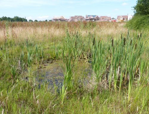 Great Crested Newt and District Level Licensing – what does it mean for your projects?