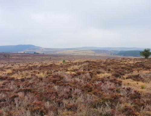 Craigneil Windfarm, Aberdeenshire Read More